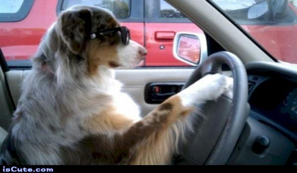 driving-iiscute