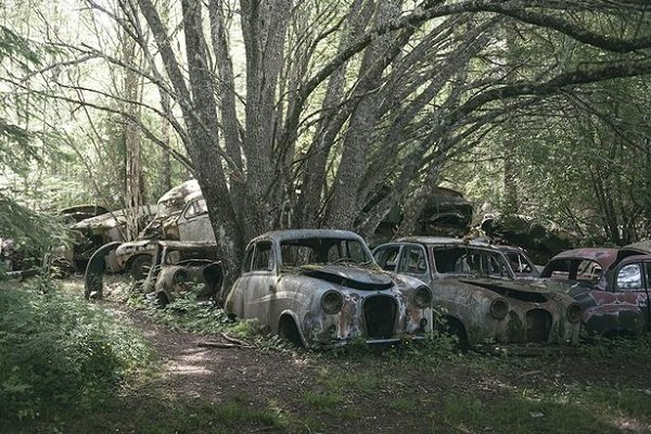 Cars Reclaimed By Nature