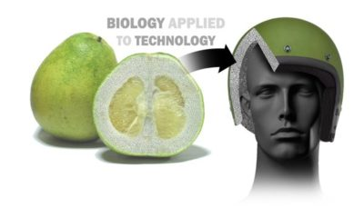bio-inspired-safety-systems