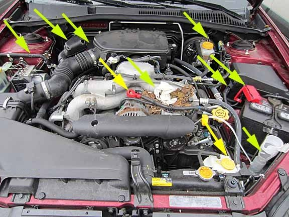Ways Of Getting Rid Of Rats Or Mice Out Of Your Car Engine