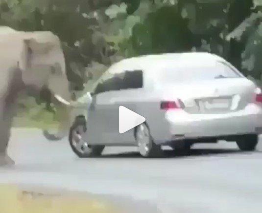 elephant damaging a car