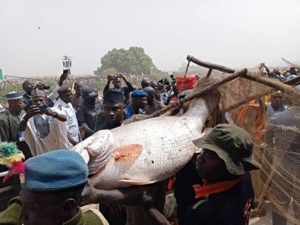 man-with-biggest-fish-at-argungu-fishing-festival-gets-n10m-2-cars-and-two-hajj-seats