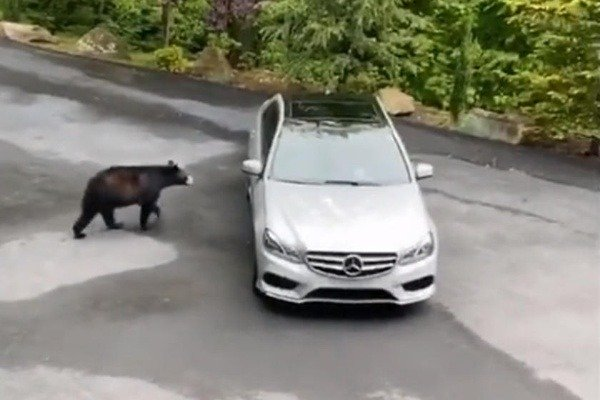 baby-bear-carjack-a-mercedes-e-class