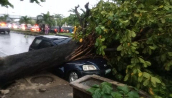 driver-lucky-to-be-alive-after-tree-falls-on-car-during-rainfall-in-surulere-lagos