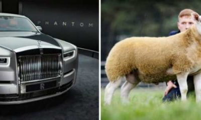 490000-worlds-most-expensive-sheep-price-of-rolls-royce-phantom-8
