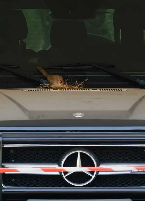 dubai-prince-mercedes-g-wagon-birds-nest