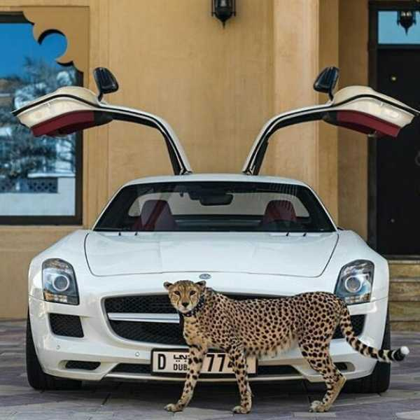 dubai-instagram-celebrity-poses-with-lions-tigers-supercars