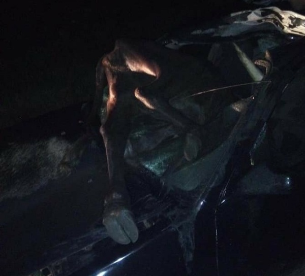 Cow Dies After Crashing Into Car In Delta State - autojosh