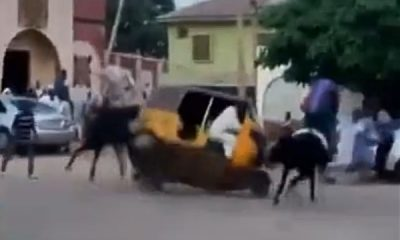 Horse Crashes Into A Keke During Dangerous Racing Competition In Northern Nigeria - autojosh