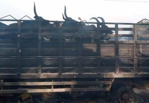 Mob Sets Truck Conveying Cows Ablaze After CrushingA Man To Death In Oyo- autojosh
