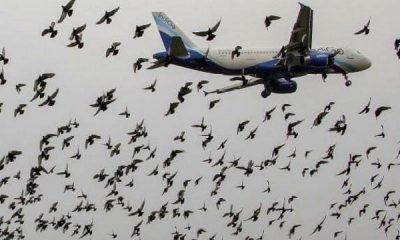 FAAN Acquires Equipment To Tackle Bird Strikes Around Airports - autojosh