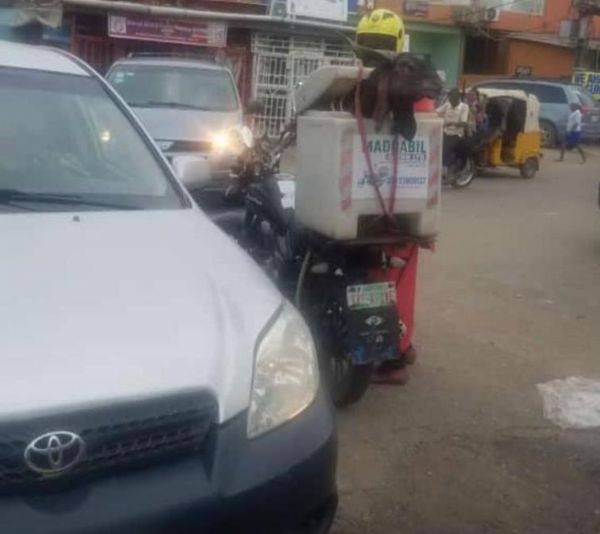 Several Dispatch Riders Seen Delivering Rams Just In Time For Sallah - autojosh