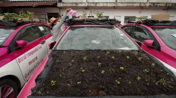 Covid-19: Hundreds Of Taxis Turned To Vegetable Farm In Thailand - autojosh